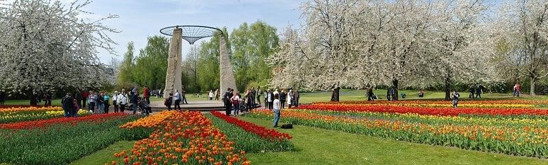 Tulipan no Britzer Garten