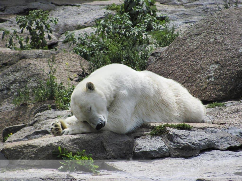 Horários e preços do Jardim Zoológico de Berlim