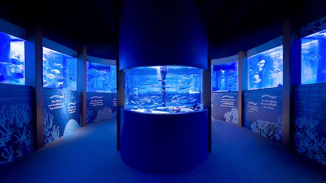 Aquadom e Sea Life em Berlim
