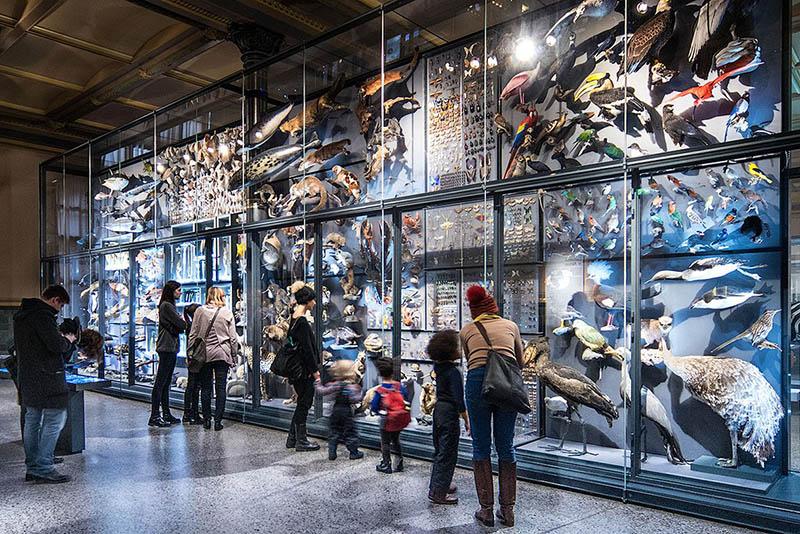 Museu de História Natural em Berlim